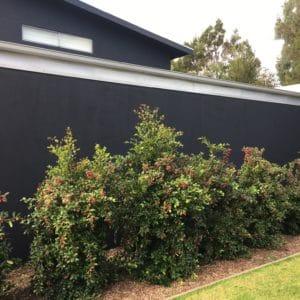 Repainting Rendered Walls #5